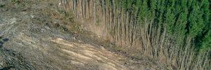 """Krav på hårdare tag mot """"importerad skogsskövling"""""""