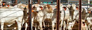 Djurhållningen står för två tredjedelar av matens utsläpp