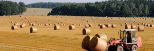 FN: Hundratals miljarder i bidrag till miljö- och hälsoskadlig matproduktion